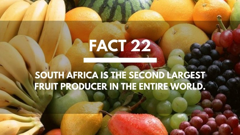 Fact-22-South-Africa-Fruit-Producer