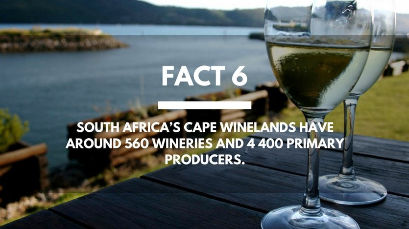 Fact-6-Wineries-South-Africa
